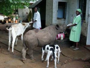 Rinoceronte casa