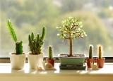 Poner cactus en las ventanas